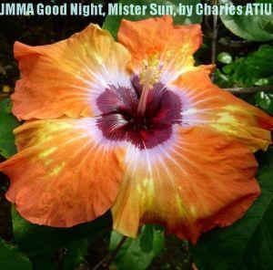 2 JMMA Goodnight Mister Sun
