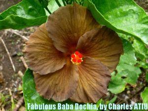 20 Fabulous  Baba Dochia