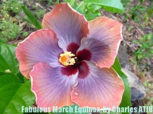 22 Fabulous March Equinox