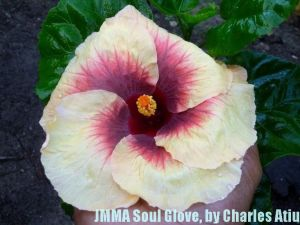 22-JMMA Soul Glove