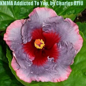 26 KMMA Addicted To You