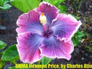 4 GMMA Haven's Price