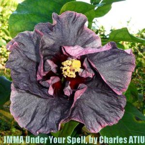 7 JMMA Under Your Spell