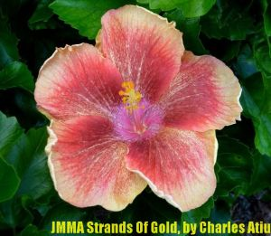 JMMA Strands Of Gold