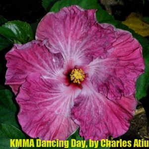 KMMA Dancing Day