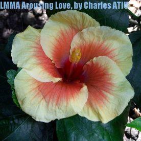 LMMA Arousing Love