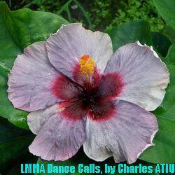 LMMA Dance Calls