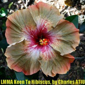 LMMA Keen To Hibiscus