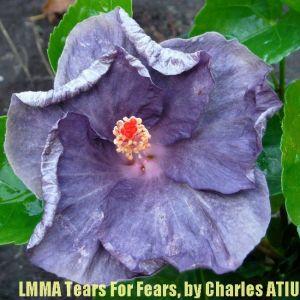 LMMA Tears For Fears