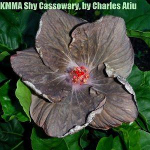 1-KMMA Shy Cassowary