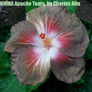 1 NMMA Apache Tears
