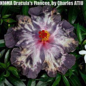 1 NMMA Dracula's Fiancée