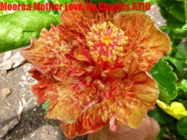10 Moorea Mother Love