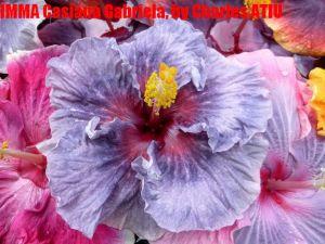 11Moorea Casiana