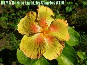 12 IMMA Harbor Light