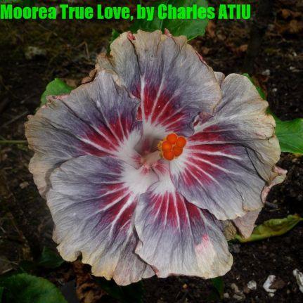 13 Moorea True Love