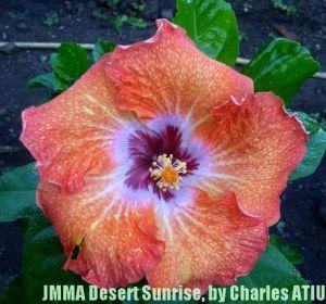 21 JMMA Desert Sunrise