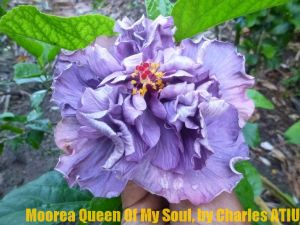 27-Moorea Queen of My Soul