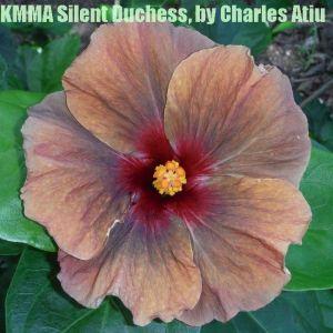 28 KMMA Silent Duchess