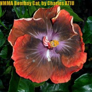 3 NMMA Bombay Cat
