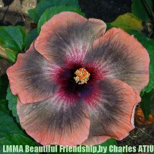 30 LMMA Beautiful Friendship