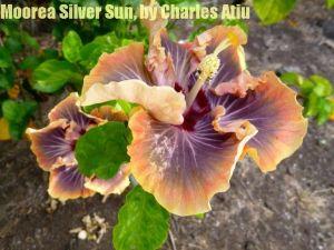 30 Moorea Silver Sun