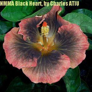 3NMMA Black Heart