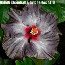7 NMMA Shamballa