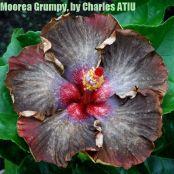 8 Moorea Grumpy