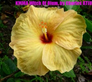 9 KMMA Witch Of Oium