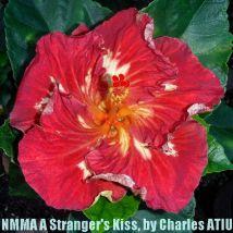 NMMA A Stranger's Kiss