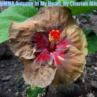 NMMA Autumn In My Heart