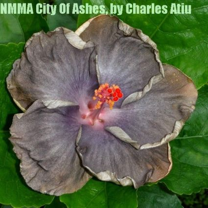 NMMA City Of Ashes