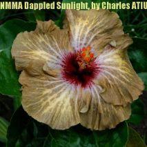NMMA Dappled Sunlight