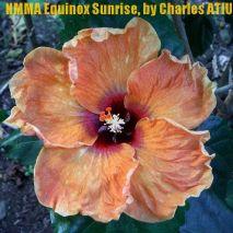 NMMA Equinox Sunrise