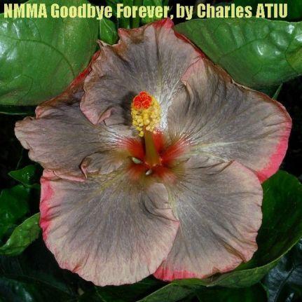 NMMA Goodbye Forever
