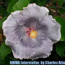 NMMA Interstellar
