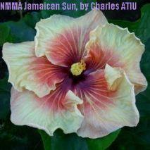 NMMA Jamaican Sun