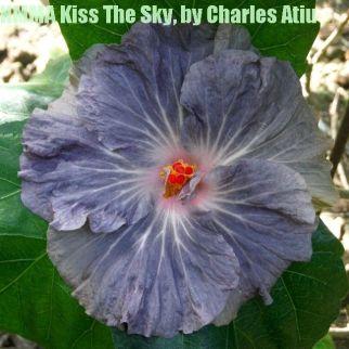 NMMA Kiss The Sky