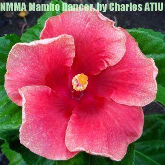 NMMA Mambo Dancer