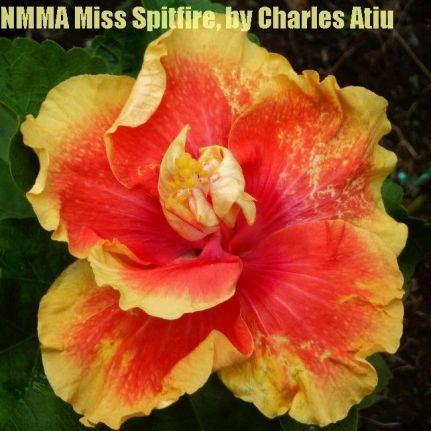 NMMA Miss Spitfire