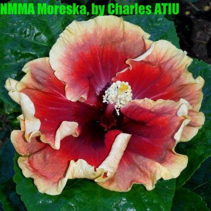NMMA Moreška