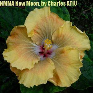 NMMA New Moon