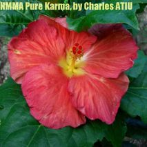 NMMA Pure Karma