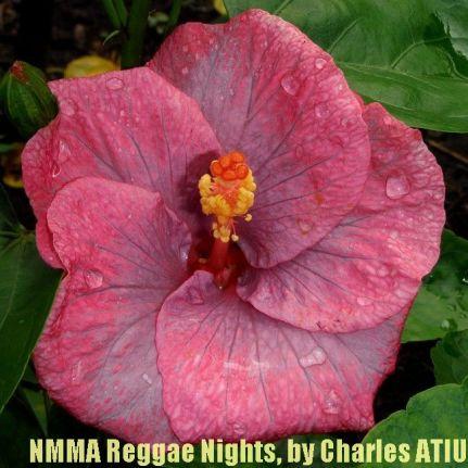 NMMA Reggae Nights