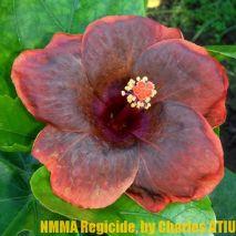 NMMA Regicide