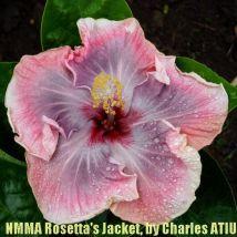 NMMA Rosetta's Jacket