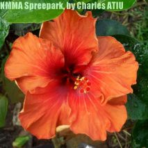 NMMA Spreepark