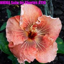 NMMA Sulu