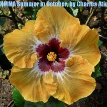 NMMA Summer In October